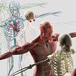 ヨガステ - ピラティスアナトミー講座(上肢・体幹編)の写真1